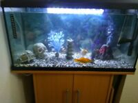 Tropical fish tank / Aquarium