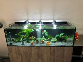 Tank and stand and fish etc