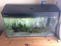 Clearseal fish tank