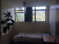 Single room available in flat share
