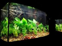 Juwel Vision 180 Aquarium and Cabinet - bow-fronted - (Excellent Condition)