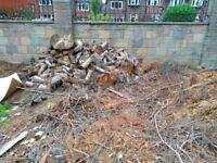 Large quantity of Conifer Logs - unseasoned
