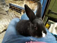 Mother and daughter rabbits in need of loving home