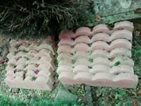 14 x garden lawn edging, new, scalloped