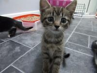 Beautiful, well socialised little kittens looking for responsible new home