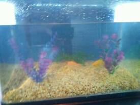Fish tank w/ gold fish, filter & light