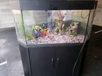 200l fish tank