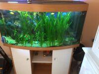 Jewel aquarium vision 4ft
