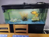 5ft boyu fishtank with all equiptment and fish