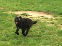 Dog Walking, Pet Sitting & Freelance Groom Service in Wimborne and surrounding areas.