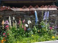 2 bed cottage wanted in South Devon or Cornwall