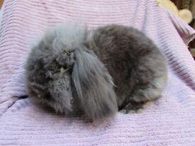 Buck Double Manned Rabbit