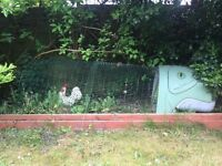 Eglu chicken coop with 2m run