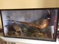 Taxidermy Display case Pheasant & Grouse