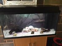 110 Litre fish tank (complete set up)