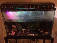 2 beautiful fish with tank filter pump food
