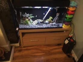 2ft tropical tank and fish