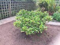 Free garden plants