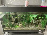 Fish tank stand and filter system