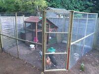 Chicken Coop & 4 hens for sale