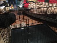 Large dog kennal