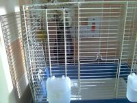 canary and cage lizard rung 20 pound