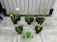 16 x Hardy Garden Plants in Pots + 2Xtra FREE - £20 - Glenrothes
