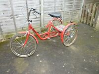 Adult Tricycle for sale