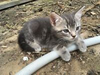 Beautiful, playful, friendly kittens