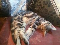 Hi I have a kitten for sale