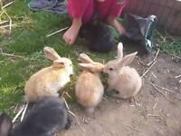 6 baby girl bunnies