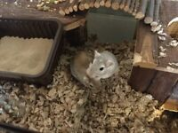 Two gerbils, large gerbilarium and stand, food, toys, pet carrier and much more!