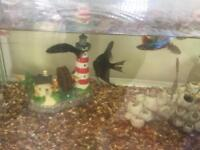 Various fish for sale