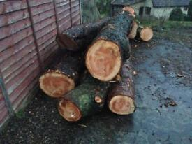 Timber or firewood