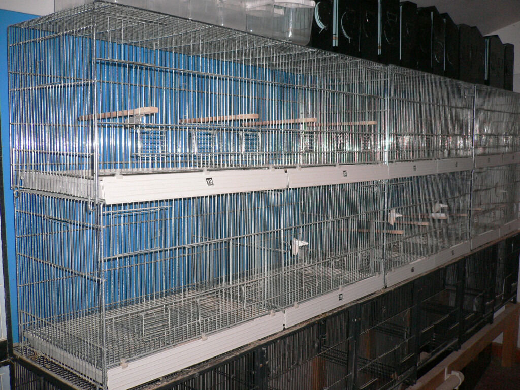 Wire Breeding Cages In Kingswood Bristol Gumtree