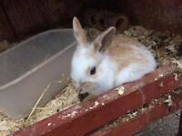 Lovely bunnies £15 each