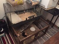 Two guinea pigs and set up
