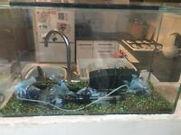 Fish tank & equipment