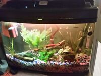 Fish tank 64 L for sale