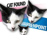 CAT FOUND - Warrenpoint area