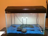 Musk Turtles for sale