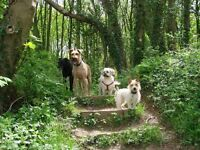 Experienced Dog Walker 'Happy2Help' Full-time professional dog walking in Nottingham since May 2011