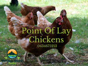 POINT OF LAY CHICKENS HENS - AVAILABLE NOW! Wollongbar Ballina Area Preview