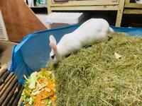 Beautiful 2 year old female rabbit