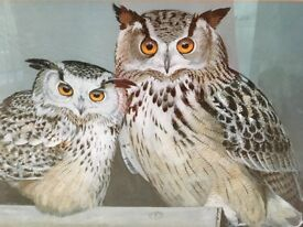 "Signed print of two Siberian Eagle Owls, framed 18"" x 22"" approx."