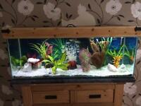 Complete tropical fish and tank