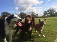 Dog day care Willesde, Kilburn, West Hampstead, Hampstead Heath, Queen's Park