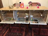 2 x canary's orange and yellow with cage full set up and all clean all in pic with light