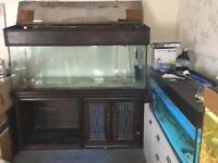 Very big 5ft fish tank