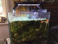 Fish Tanks and items